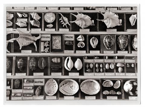 Malakologická sbírka přírodovědeckého muzea